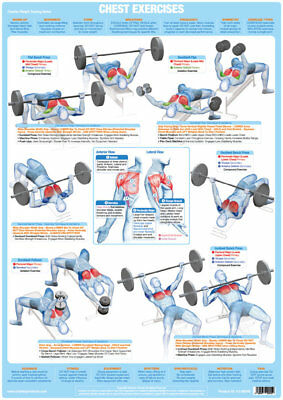 Chest Muscles Weight Lifting And Body Building Poster Exercise Training Chart    • 9.99£