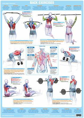 Back Muscles Weight Training And Body Building Poster Gym Exercise Chart    • 9.99£