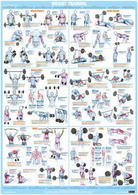 Weight Training Bodybuilding Poster Keep Fit Home Exercise Fitness Gym Chart • 14.99£