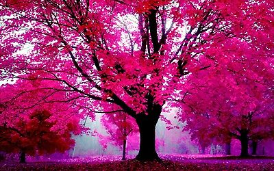 Pink Tree Gardens Beautiful Colour Bright 16 X20  Canvas Pictures Wall Art Print • 19.99£