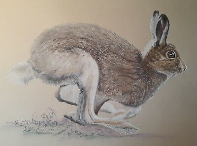 Original Drawing By The Artist. 'Speedy' Mountain Hare. Oil Pastel Pencil • 49.95£