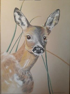 Original Fine Art Drawing. Roe Deer. 'Flight Or Fight'. Oil Pastel Pencils. • 49.95£