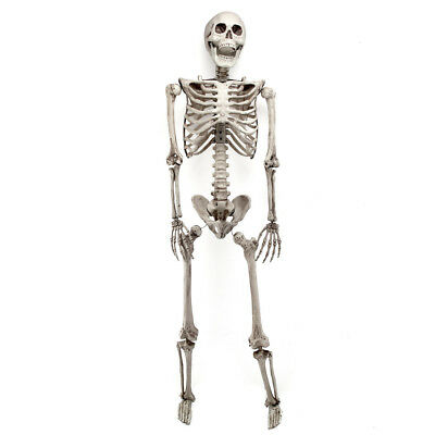 $17.96 • Buy 3FT Halloween Poseable Human Skeleton Party Decoration Prop Full Body Life Size