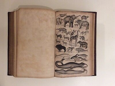 Animated Nature - A History Of The Earth & Animated Nature 1840 Oliver Goldsmith • 85£