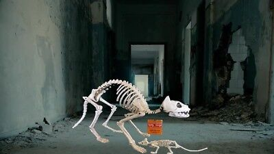 $24.95 • Buy Kitty Bonez Cat Skeleton & Mouse Life-Size Pet Halloween Prop Decoration  NEW