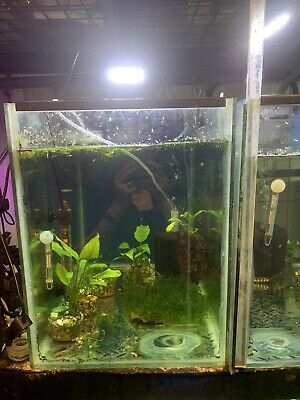 AU80 • Buy Fish, Fish Tanks 70 Litter And With   ,filter