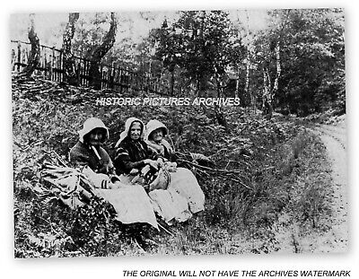 Cannock Chase Nr Rugeley Staffs Victorian Ladies Collecting Fire Wood 1896 • 4£