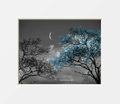 $18.99 • Buy Black White Blue Wall Art, Trees Moon, Bedroom, Living Room Blue Wall Picture