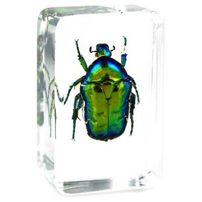 $4.99 • Buy Green Chafer Beetle Insect Specimen Clear Resin Paperweight Collection Decor.