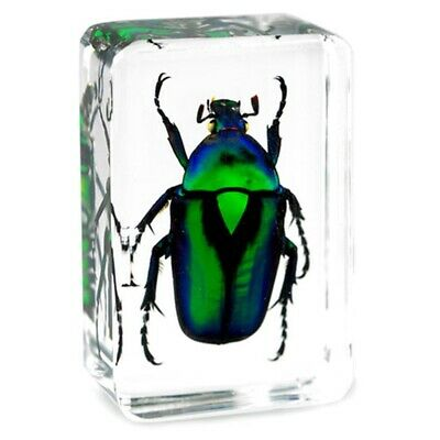 $4.99 • Buy Green Emerald Chafer Beetle Insect Specimen Clear Resin Paperweight Collection