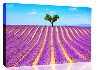Lonely Tree In Purple Lavender Field Canvas Wall Art Picture Print • 19.99£