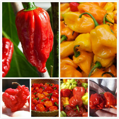 £4.67 • Buy 50Pcs Seeds Chili Peppers Kinds Extremely Hot And Sweet Bonsai Plants In Garden