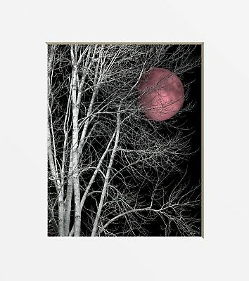 $19.99 • Buy Black White Pink Bedroom Wall Art Pictures Tree Moon Home Decor Photography Art