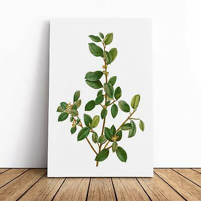 Italian Buckthorn Tree Pierre-Joseph Redoute Framed Canvas Print Wall Art • 24.95£