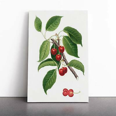 Sour Cherry Tree Flowers Vintage Giorgio Gallesio Framed Canvas Print Wall Art • 19.95£