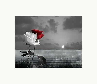$16.99 • Buy Black White Red Rose Floral Coastal Ocean Sunset Bedroom Photography Wall Art