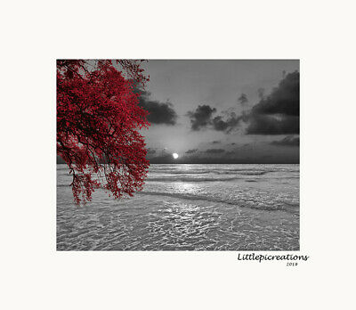 $19.99 • Buy Black White Red Wall Art Pictures, Tree, Coastal, Sunset, Bedroom Wall Decor