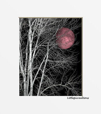 $19.99 • Buy Black White Pink Wall Pictures, Tree Moon, Bedroom Home Decor Wall Art