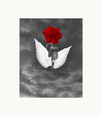 $19.99 • Buy Black White Red Wall Art, Rose Flower Angel Wings Home Decor Wall Art Picture