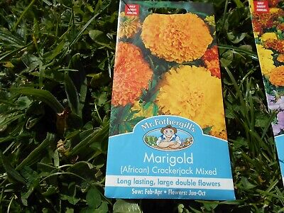 MARIGOLD (AFRICAN) CRACKERJACK MIXED 120 Seeds Free Flowering Large Double Bloom • 3£