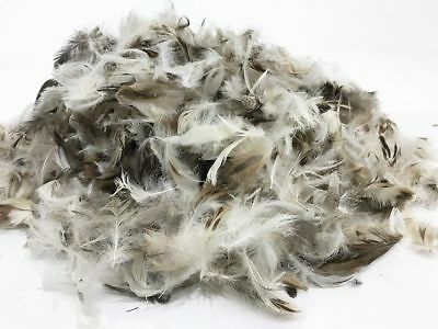£7.99 • Buy Soft Loose Duck Feather Toy Stuffing Pillow Cushion Sofa Feather Filling