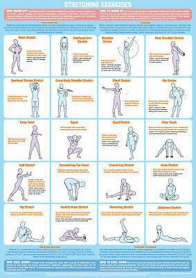 Exercise Stretching Poster Warm Up Cool Down Gym Chart • 14.99£