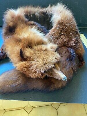 Vintage Red Fox Fur Stole 1950s 48  Long Nose To End Of Tail Good Condition • 25£