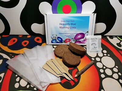£7.99 • Buy Grow Your Own Morning Glory Kit - Heavenly Blue - Eco Friendly Gift