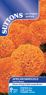 African Marigold Seeds Space Hopper Approved Suttons Retailer • 1.99£