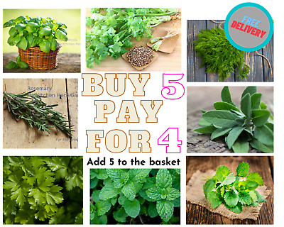 £1.99 • Buy Herb Seeds Basil Chives Coriander Dill Mint Marjoram Parsley Rosemary Sage Thyme