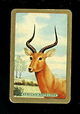 1 Swap Card COLES BLANK BACK HEAD OF AFRICAN ANTELOPE WITH LARGE HORNS  • 3.33£