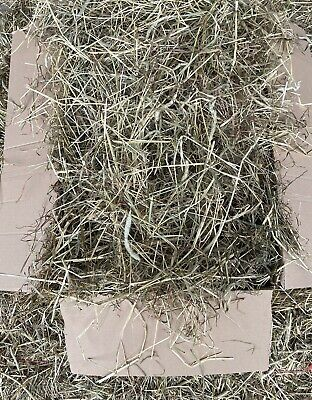 £19 • Buy Box Of Quality Timothy Hay For Rabbits, Guinea Pigs And Other Small Animals 7kg