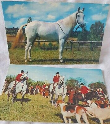 £2.99 • Buy 2 Vintage Postcards With A Horse/ Hunting Theme. *UNPOSTED*.