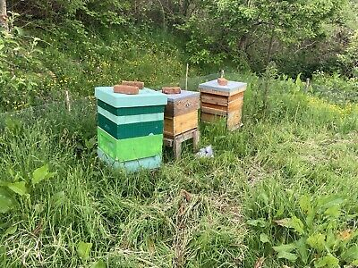 £325 • Buy Working Colony Of Bees In National Bee Hive