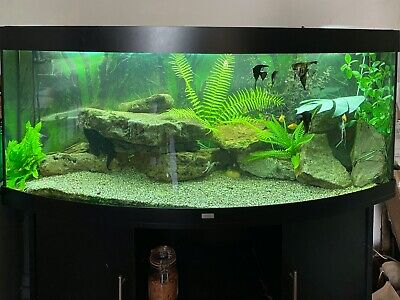 £350 • Buy 450L Juwel Vision Tropical Fish Tank Aquarium, Bow Fronted With Black Cabinet