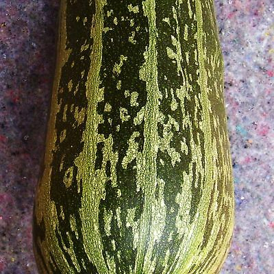 £4.80 • Buy MARROW - GREEN BUSH - 24 Seeds [..traditional Green And Yellow Striped Fruits!]