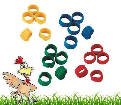 10 X 18mm Poultry Spiral Leg Rings 5 Colours Chicken Duck Hen Hatching Eggs • 4.25£