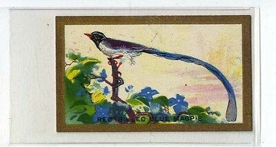 $4.19 • Buy (Ja8261-100)  Abdulla,Feathered Friends,Red-Billed Blue Magpie,1934#6