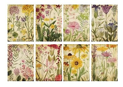 Pretty Botanical Flowers Card Toppers/Scrapbooking/Crafting • 3.15£