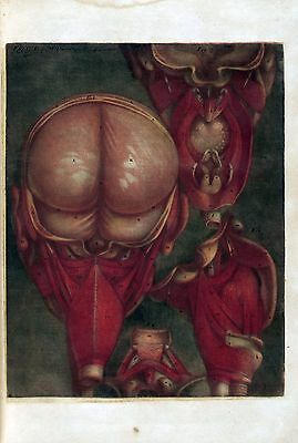 $16 • Buy 1748 Antique Medical Poster Print Flayed Dissected HUMAN Head Exposed Brain 86