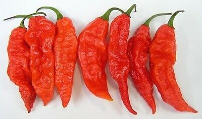 Sold Out Naga Morich Chilli Seeds X 15 - Isolated Pure Strain, Quality Guranteed • 3.25£