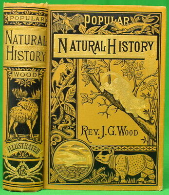 £247.80 • Buy 'Popular Natural History' By Rev. J. G. Wood, M. A.