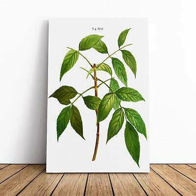 American Ash Tree Branch Pierre-Joseph Redoute Framed Canvas Print Wall Art • 22.95£