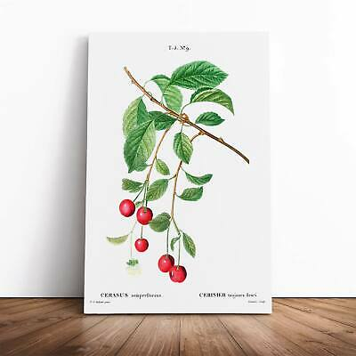 Cherry Tree Branch Flowers Pierre-Joseph Redoute Framed Canvas Print Wall Art • 19.95£