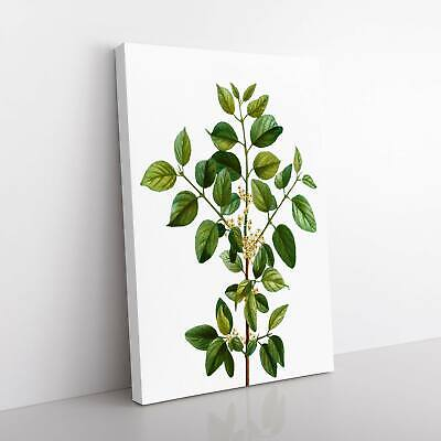 Buckthorn Tree Branch Pierre-Joseph Redoute Picture Framed Canvas Print Wall Art • 24.95£