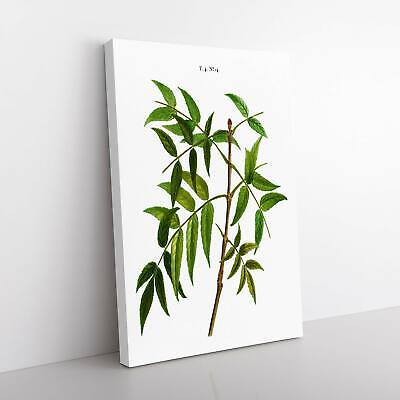 European Ash Tree Branch Pierre-Joseph Redoute Framed Canvas Print Wall Art • 22.95£