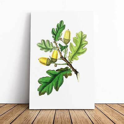 English Oak Tree Illustration Flowers Vintage Framed Canvas Print Wall Art • 22.95£