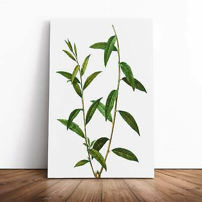 Golden Willow Tree Branch Pierre-Joseph Redoute Framed Canvas Print Wall Art • 22.95£