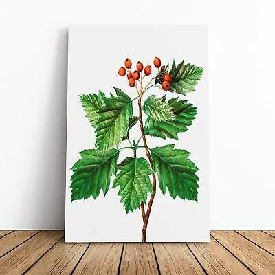 Hawthorn Berry Tree Flowers Pierre-Joseph Redoute Framed Canvas Print Wall Art • 22.95£