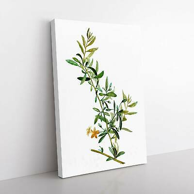 Goji Berry Tree Flowers Pierre-Joseph Redoute Framed Canvas Print Wall Art • 22.95£
